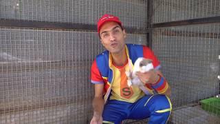 عمو صابر والارنب - Amo Saber And the rabbit