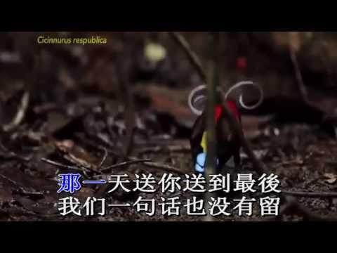 Zhu ni yi lu shun feng   Tien ban len duong Karaoke