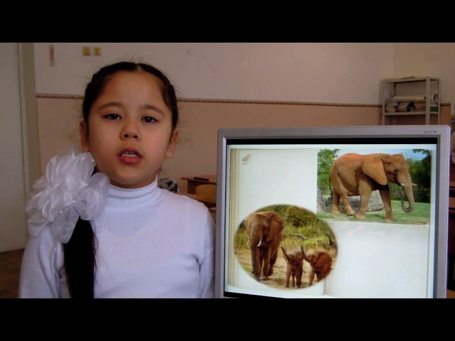 """Изображение предпросмотра прочтения – «Учащиеся МБОУ""""Авиловская СОШ"""" 3 класс» читают произведение «Что ни страница, — то слон, то львица» В.В.Маяковского"""