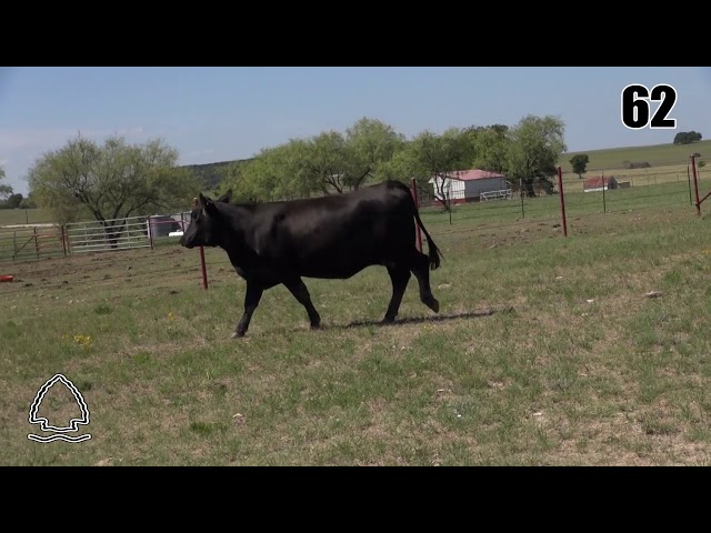 Pearcy Angus Ranch Lot 62
