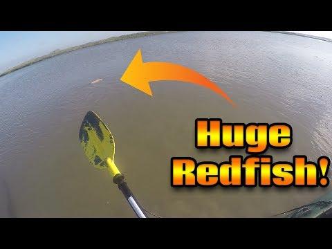MONSTER Redfish In Shallow Water | Fishing Corpus Christi
