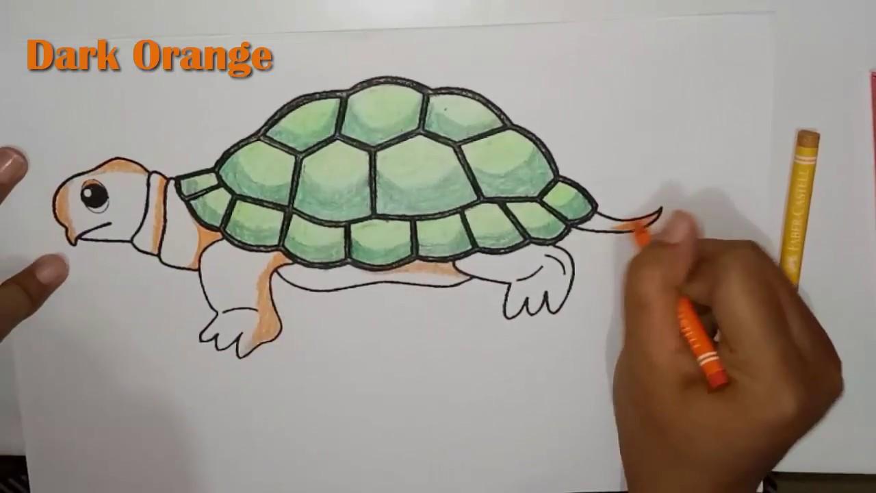 Mewarnai Gambar Kura Kura Turtle Coloring Pages For Kids
