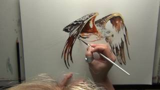 How to paint a Red Kite in watercolour