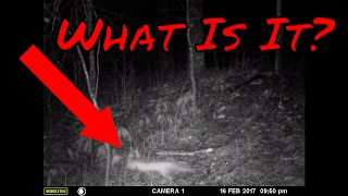 revealing trail camera photos squirrel hunting