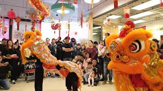 Chinese New Year Lion Dance 農曆新年舞獅