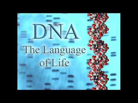 Dr. Stephen Meyer - Genetics Proves Design and Disproves Evolution PT 1 of 2