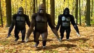 pyar ki pungi chipmunks monkey dancing video