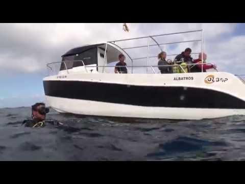 Diving TENERIFE 2016