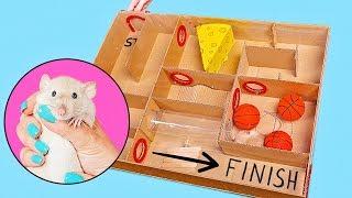 Download Sam Sapeca faz um labirinto para seu ratinho Mp3