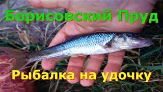 Борисовский пруд Рыбалка на удочку