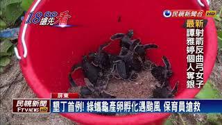 墾丁首見綠蠵龜產卵  27隻小海龜成功野放-民視新聞
