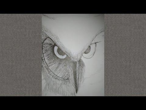 Unduh 680+  Gambar Burung Hantu Hk HD Paling Unik Free