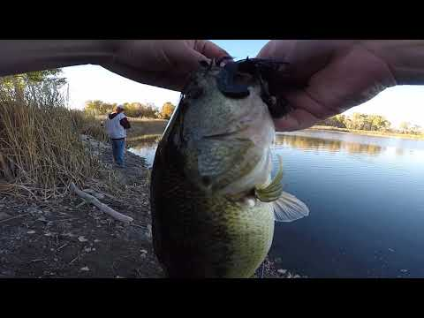 Colorado Bass Fishing With Swim Jigs And Chatterbaits (nice Fish!)