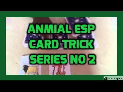 ONLINE MAGIC TRICKS TAMIL I ONLINE TAMIL MAGIC #356 I ANMIAL ESP CARD TRICK NO 2
