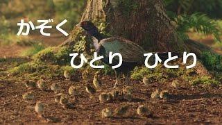 YouTubeデビューしませんか? → http://www.lp-kun.com/web/lp_kun14494...