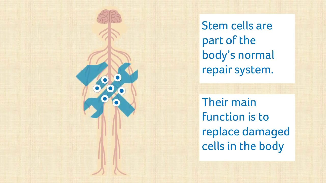 Stem cell therapy | MS Trust