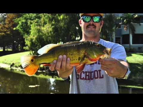 Fishing in Boca