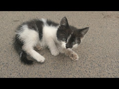 Little kitten lives on the street