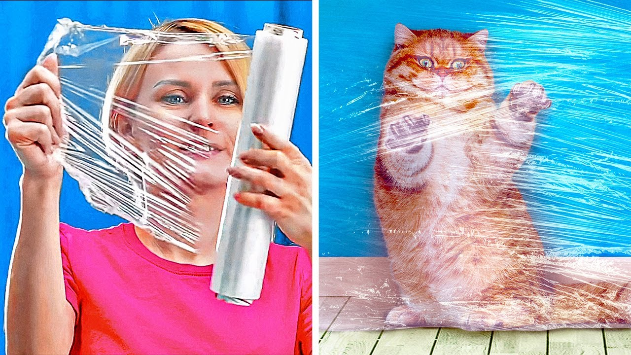 14 TRICKS EVERY PET OWNER SHOULD KNOW