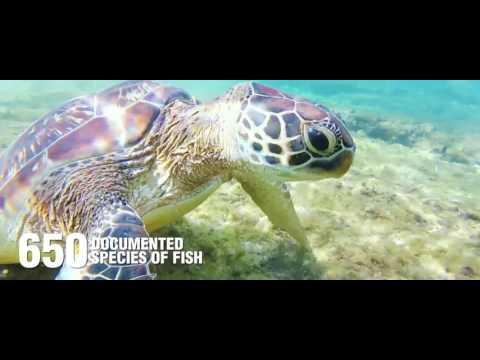 APO ISLAND PROTECTED SEASCAPE & LANDSCAPE