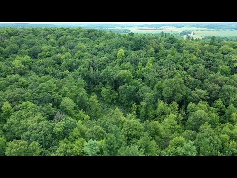 Wooded Hunting Property And Scenic Building Site For Sale In Dunn County, WI (107 Acres)