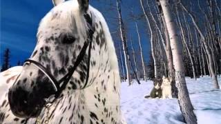 Picture Collection Of Horses   Appaloosa Horse