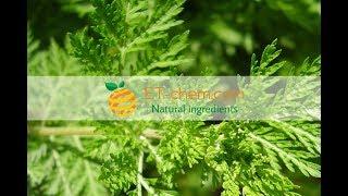 Artemisinin, Artemisia annua, Sweet wormwood extract,benefits,production 2018