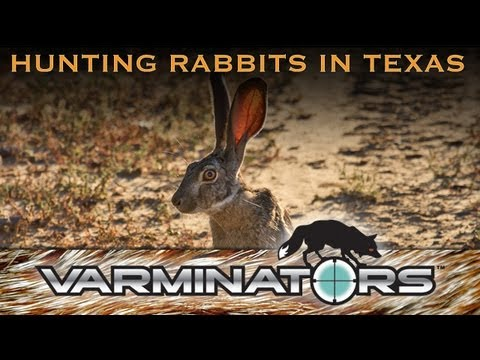 Hunting Rabbits in Texas