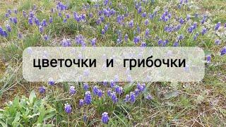 Грибочки цветочки.