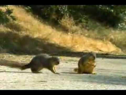 Geico Car Insurance Squirrel Commercial