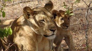 Tanzania Safari Trip to Selous, Mikumi, and Zanzibar
