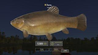 Русская рыбалка 4 - озеро Медвежье - Линь
