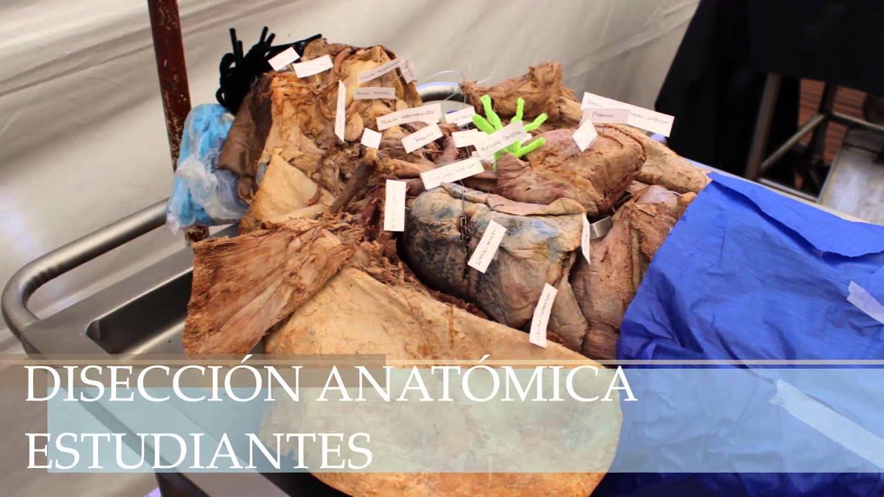 XVIII Concurso de creatividad en anatomía UNAM - YouTube