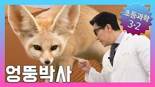 사막에는 어떤 동물이 살까요? | 초등3학년2학기 과학…