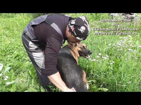 Как расчесать собаку