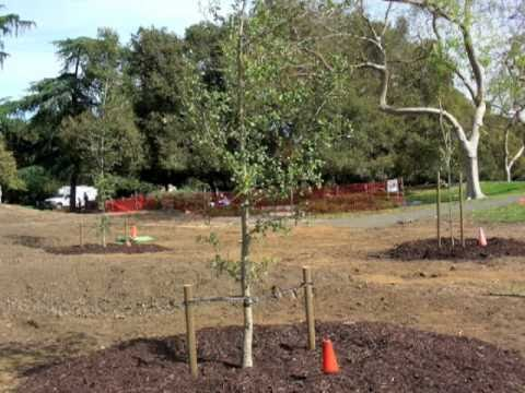 Palo Alto Arbor Day celebration