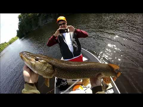 Large pike on the Androscoggin River