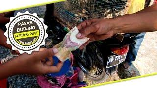 BIRD MARKET : Penjual Burung Pipit Lima Ribuan Di Acara Kuda Lumping