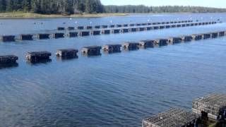 OYSTER FARMING WITH ZAPCO FLOATING OYSTER BAGS A GREAT SLIDESHOW