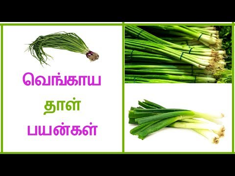 Health Benefits spring Onions in Tamil- Vengaya Thal Benefits  | Tamil Dear