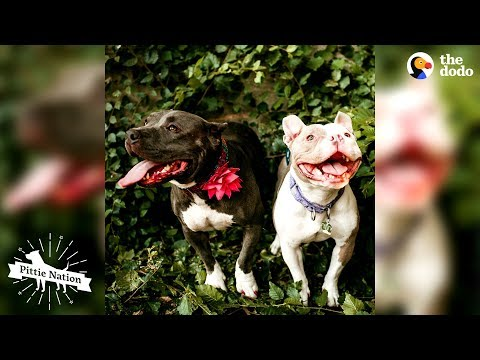 These Pitties Rescued Each Other | The Dodo Pittie Nation