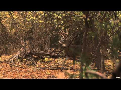 NonStop Hunting - Kansas