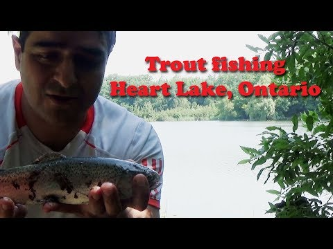 Fantastic Trout Fishing Spot Near Toronto (Heart Lake, Brampton)