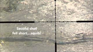 22 CCI CB Short vs Empty shotgun shells @ 50yds
