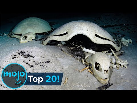 Top 20 Creepiest Things Found in the Ocean