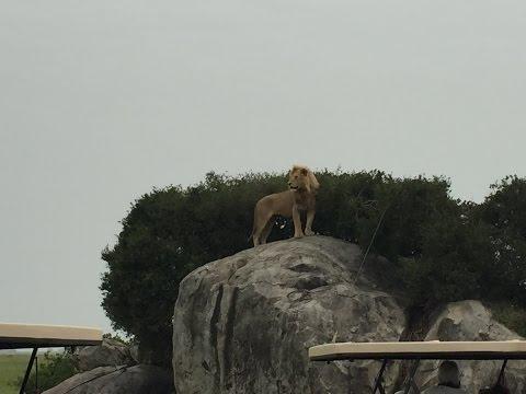 Safari Tanzania 2016