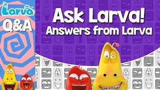 official questions and answers - answers from larva - special video