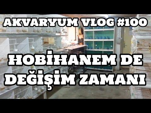 Akvaryum Vlog #100 (Hobihanem De Değişim Zamanı)
