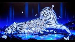 Я рисую, как рисовать тигра , очень красивый тигр  1 часть(Этот ролик обработан в Видеоредакторе YouTube (https://www.youtube.com/editor), 2016-02-01T18:09:55.000Z)