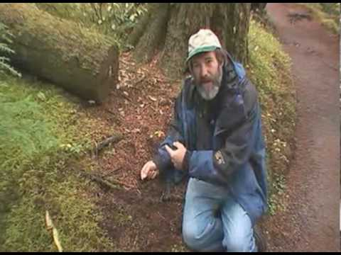 Squirrel Hunting Truffles